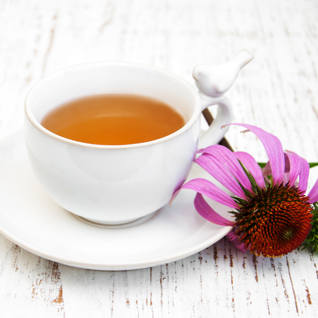 Echinacea Flower Teain white tea cup with hot water