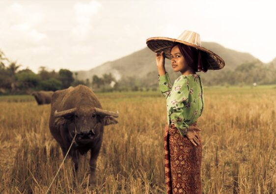 Tamaraw Bull and Filipina Standing in a Field